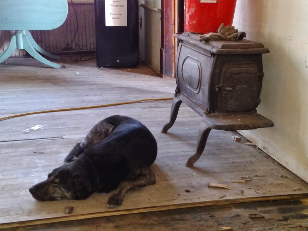 Dog and stove
