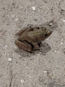Basement Frog