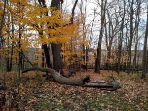 Tree comes down