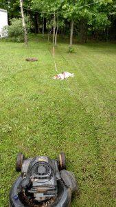 Unmotivated Beagle