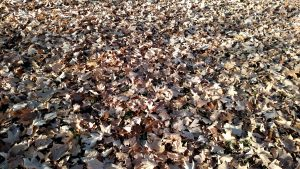 Leaves are Thick