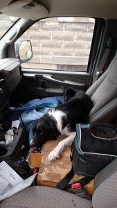 Jax in the Van